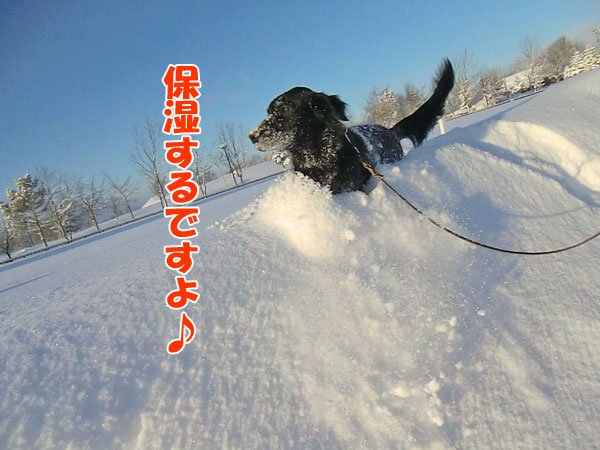 20121213hositsu-coco