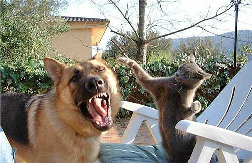 20160509-dogcat-1