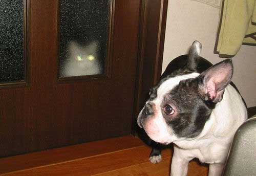 20160509-dogcat-2