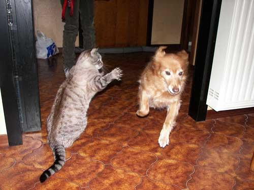 20160509-dogcat-3