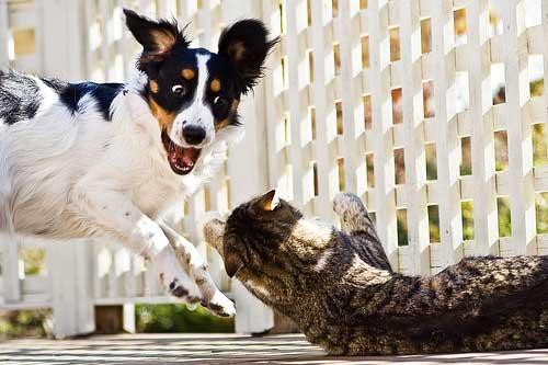 20160509-dogcat-7