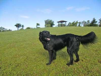 greyhound-5-400