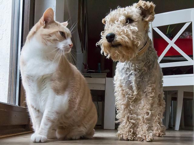 cat-dog1