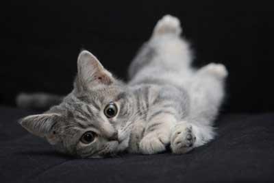 cat2-400