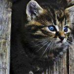 cats-2-20161027